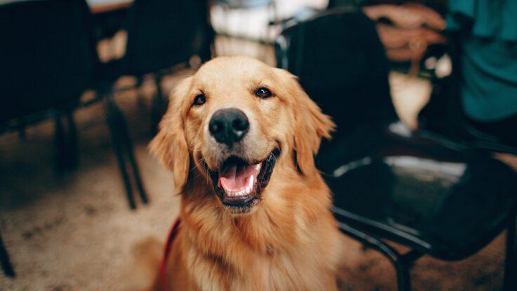Hundegeruch - Übler Geruch: Warum stinken Hunde ?